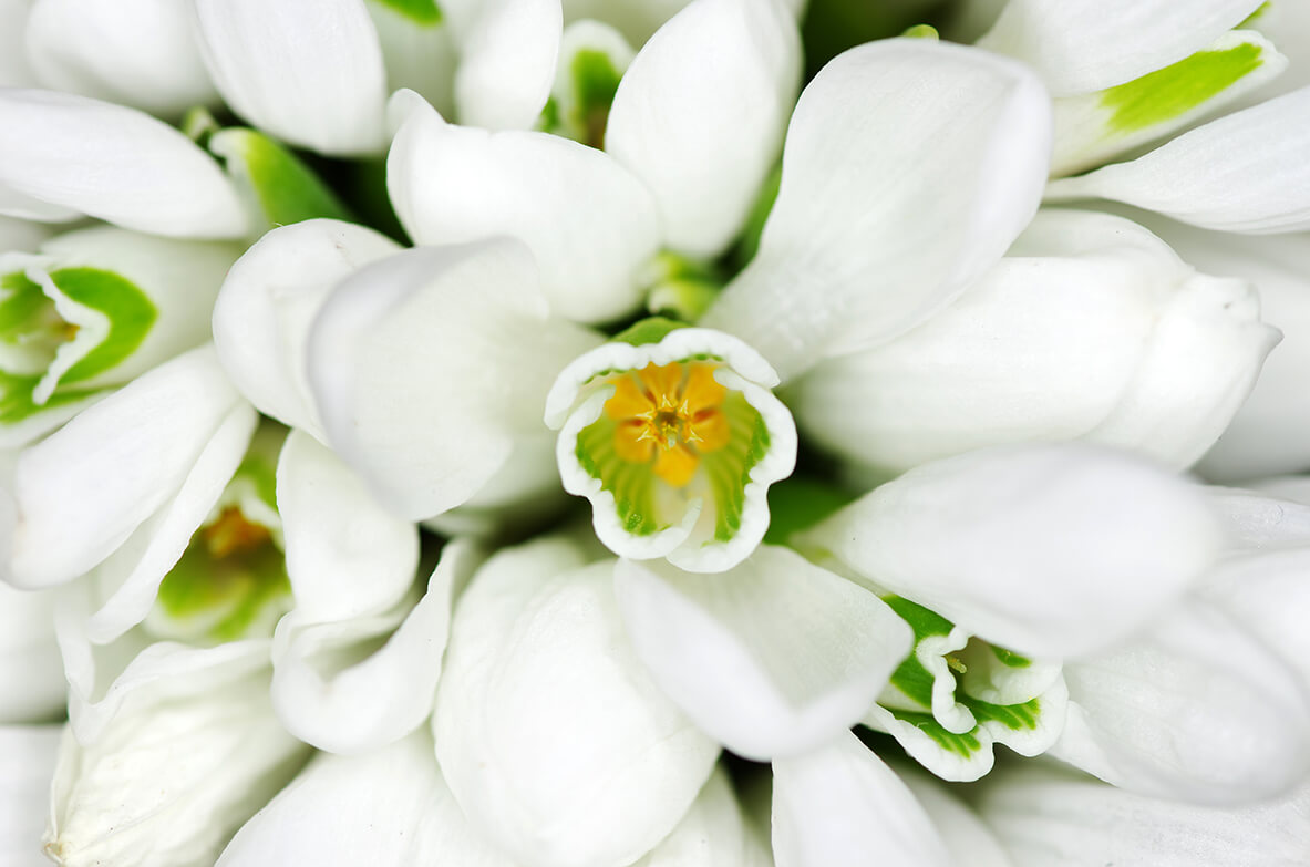 Made from the SnowdropFlower